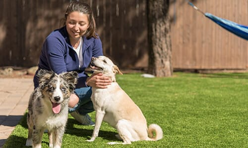 Woman Petting Her Dogs on Backyard Turf