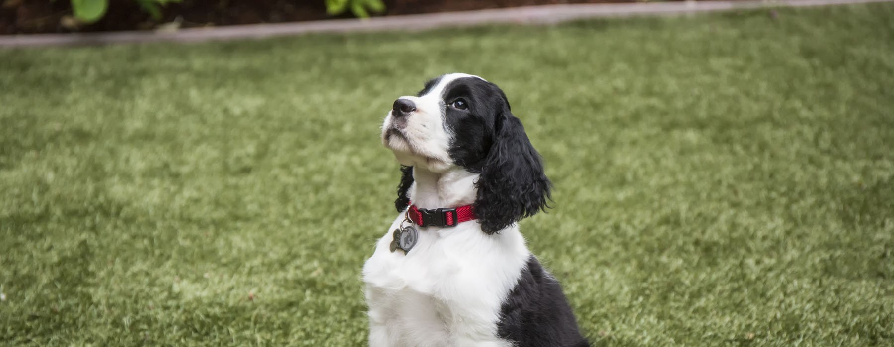 How to Prevent Pet Odors in Artificial Grass